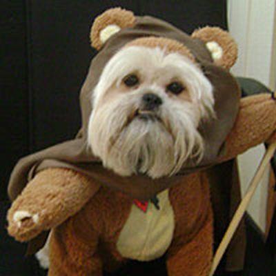 スターウォーズな犬15