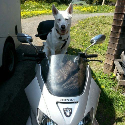 犬の新しい飼い主が写真を送ってきた05