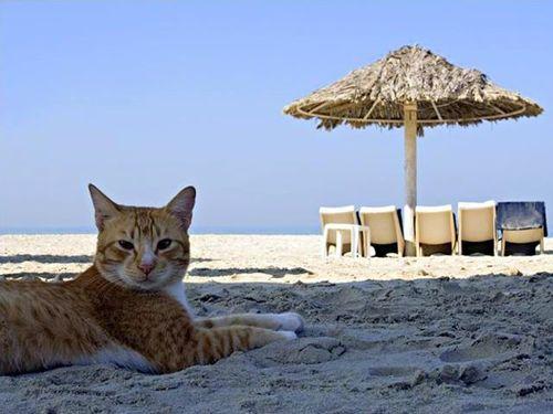 夏を満喫する猫00