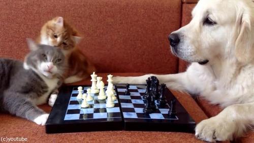 猫がチェスの審判をすると…03