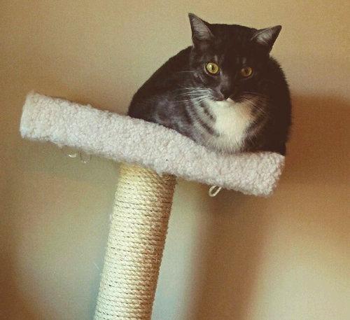 猫が太りすぎたと思うとき02
