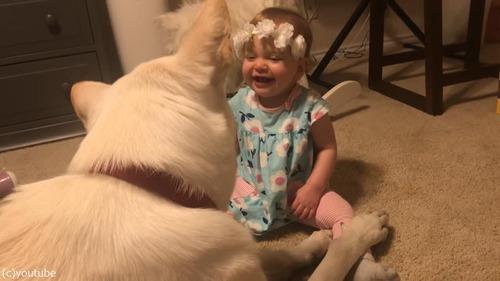 犬、赤ちゃんにキスのお返し04