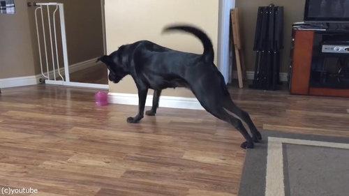 犬とカーペット02