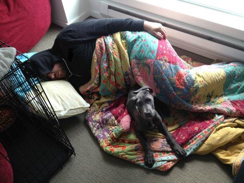 犬をベッドに寝かせるのは禁止01