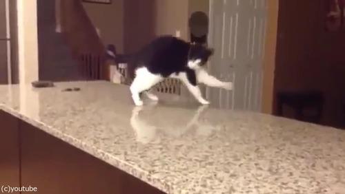 「この猫に…何が起きてるの!」03