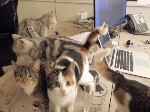 職場が猫だらけだったら14