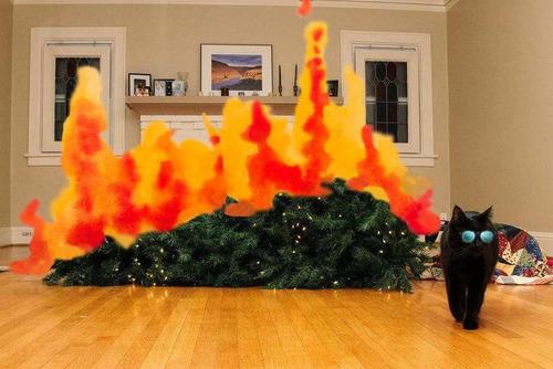 クリスマスと猫05