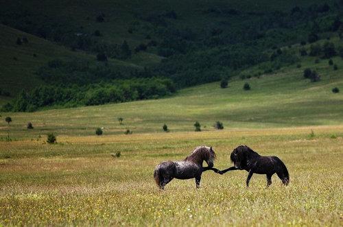 馬の闘いかた01