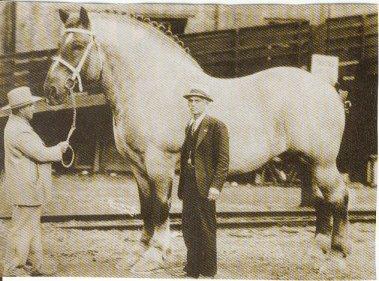 ラオウの乗る黒王号のように巨大な馬01