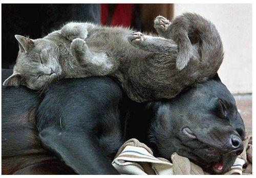 眠る猫17