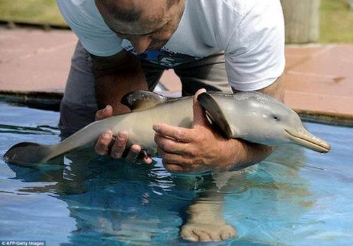 イルカの赤ちゃん01