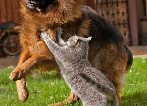 犬と猫がギュッ09