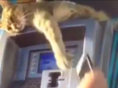 ATMの番猫03