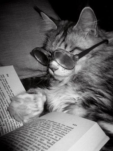 読書猫14