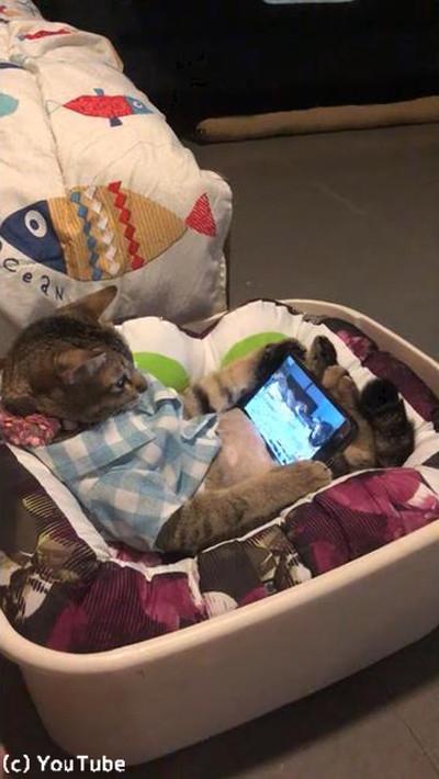 特等席でくつろぐ猫ちゃん01