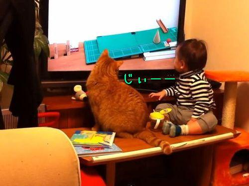 ピタゴラスイッチに夢中な猫と赤ちゃん00