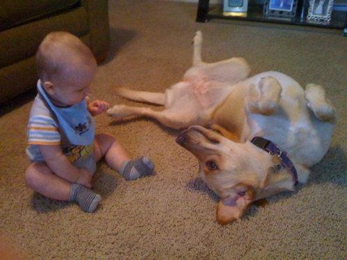 息子と愛犬の友情08