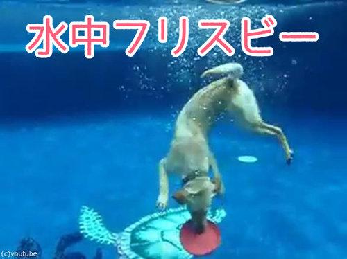 フリスビー犬00