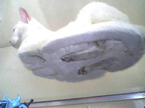 ガラスの上の猫04