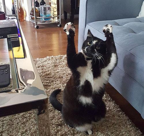 ばんざい猫04