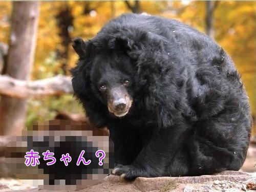 クマのお母さん00