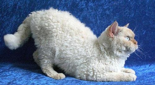 前世は別の動物だったであろう猫11