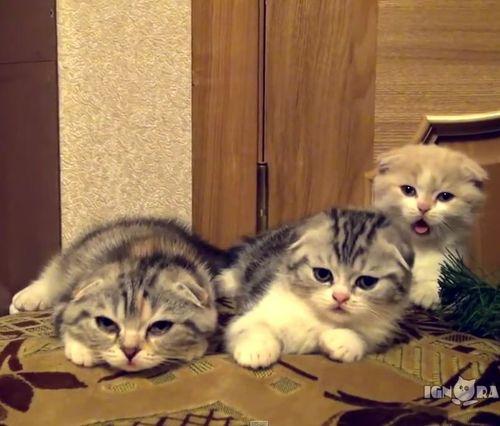 子猫3匹のあくび01