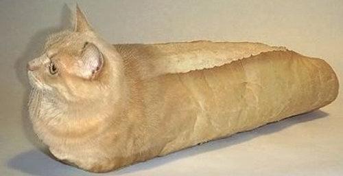 猫の「香箱座り」をパンの塊という理由12