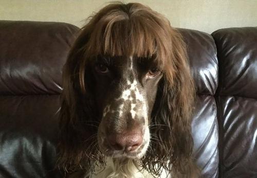 ロックダウン中の犬のヘアカット03
