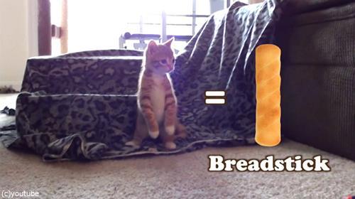 猫をパンにたとえると01