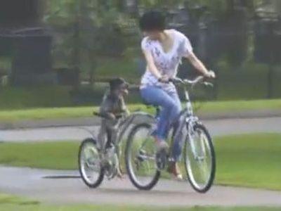 自転車漕ぐ犬
