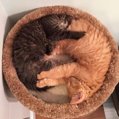 ベッドをシェアしていた子猫2匹02