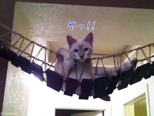 猫と吊り橋00