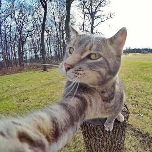 犬たちと一緒に自分撮りをする猫05