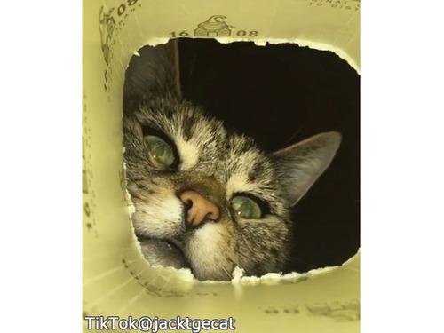 穴の中をのぞき込む猫…ちょっと怖いけどかわいい00