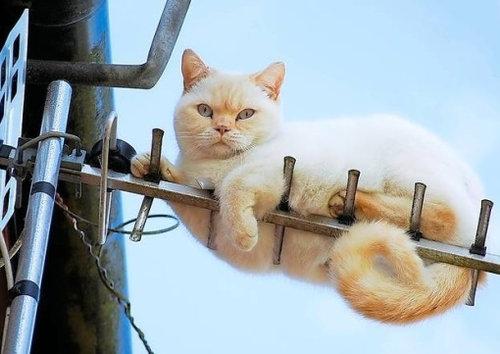 テレビを見るのを邪魔する猫19