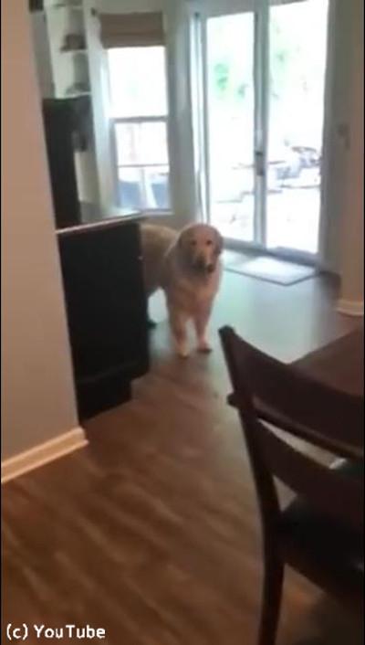 犬「お出かけしないで!」01