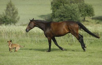 馬と犬02