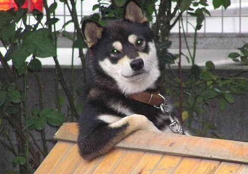 犬のすばらしいポーズ13