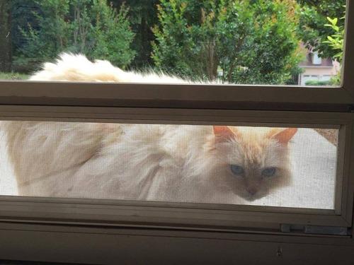 隣人の猫シンバ00