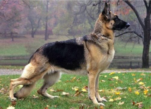 犬種は100年でこう変わった08
