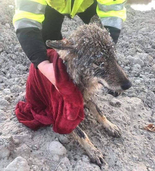 犬を助けたと思ったらオオカミだった01
