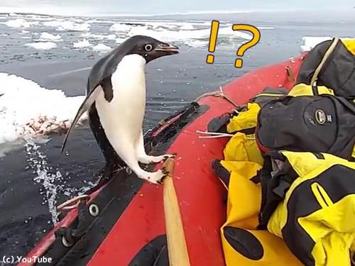 ペンギン「間違えました」00