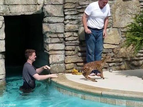 プールの奥に子鹿がいる03