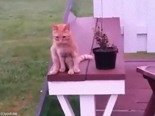 人間のように座る猫02