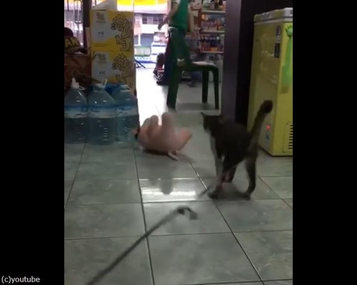 ぬいぐるみVS猫04