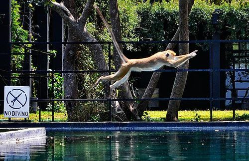 プールに動物16