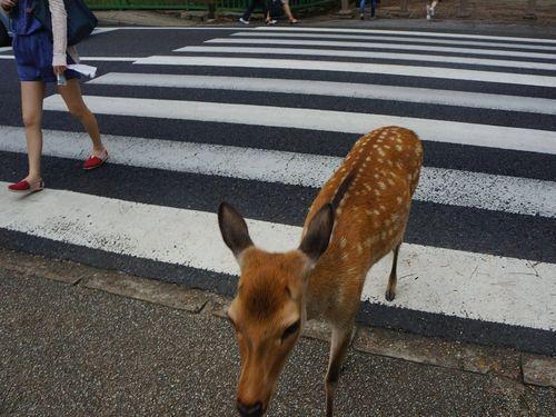 奈良の鹿と外国人06