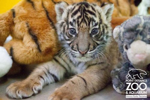動物の赤ちゃん15