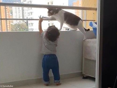 幼児を守る猫03